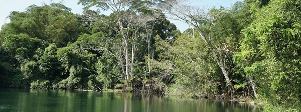 Pulau Ubin jungle luxuriante