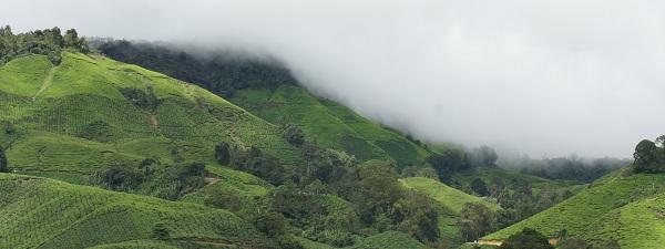 La brume se lève sur Cameron Highlands