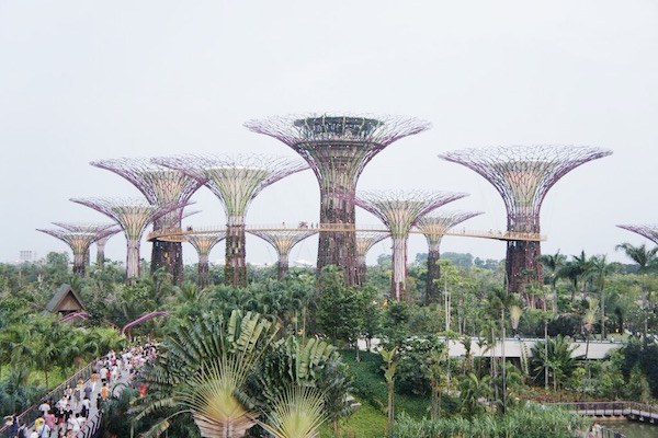 Gardens By the Bay à Singapour