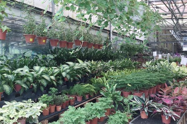Plantes à Singapour