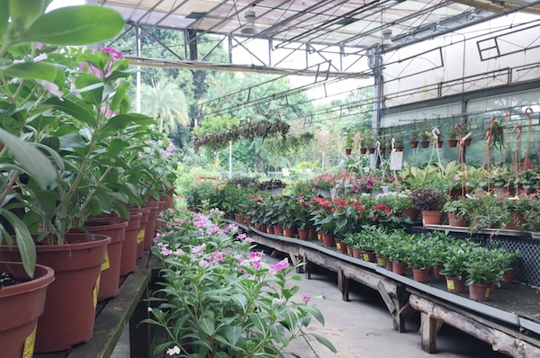 Jardin a Singapour