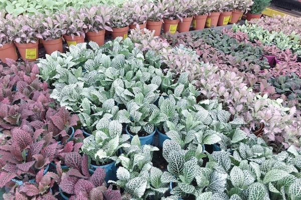 Plantes a Singapour