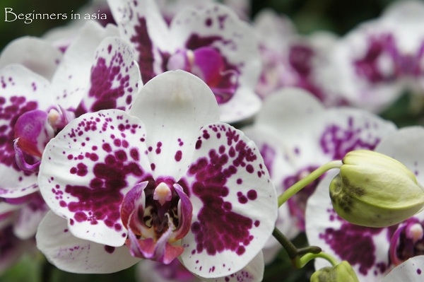 Singapour, Botanical Gardens - Photo de Sylvie (Beginners in Asia)