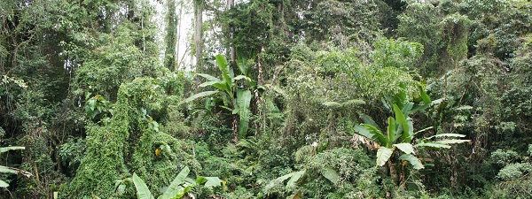 La Jungle à Cameron Highlands