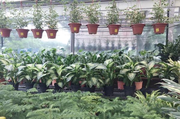 Ou acheter des plantes a singapour